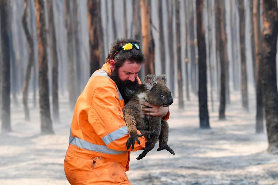 """AUSTRALIA IN FIAMME, IL WWF: """"UN MILIARDO DI ANIMALI UCCISI DAGLI INCENDI DOLOSI"""""""