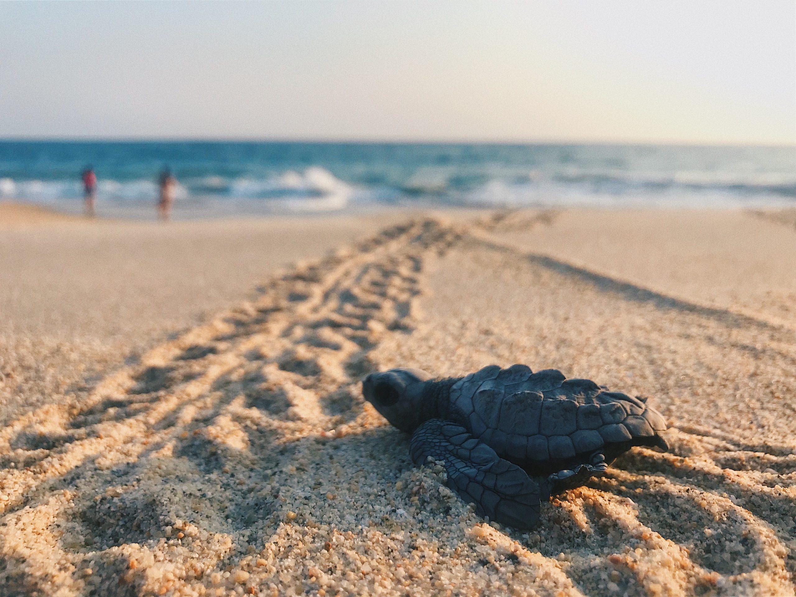 Due tartarughe Caretta Caretta rimesse in libertà a Otranto
