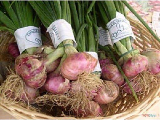 Cipolla di Airola: parte rilancio con presidio Slow Food