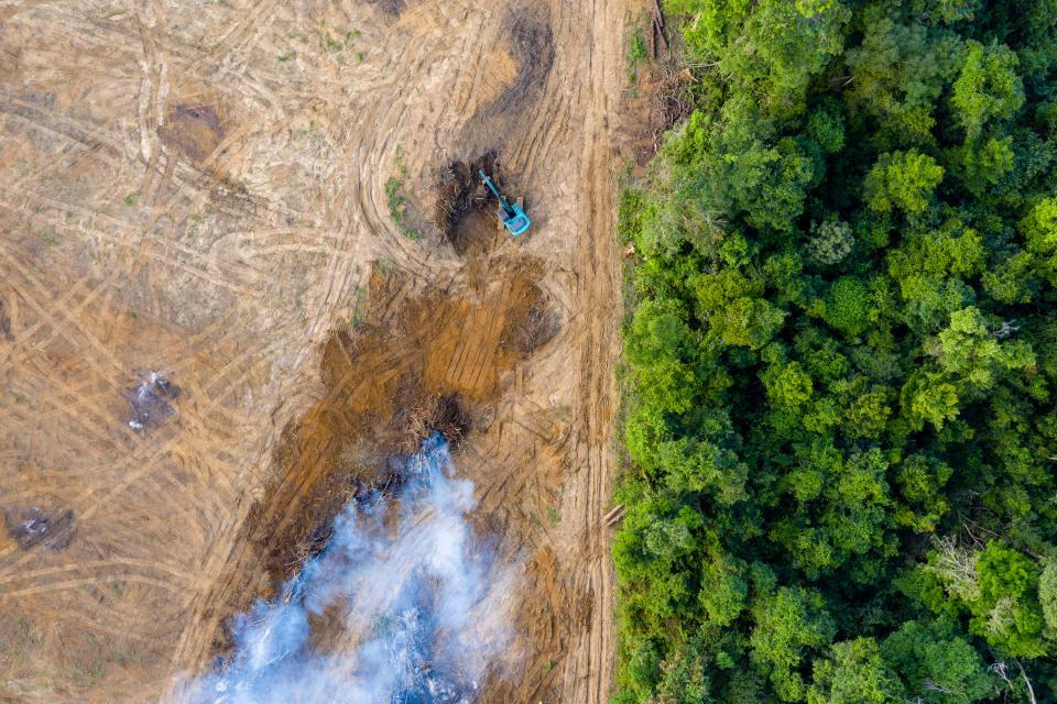 Ambiente: WWF e altre associazioni lanciano Together4Forests, la campagna contro deforestazione.