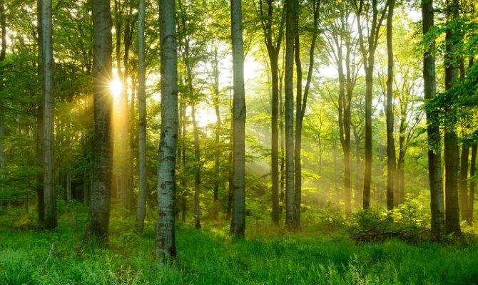 Turismo. Ecco ritiri spirituali nelle foreste per svegliare i sensi