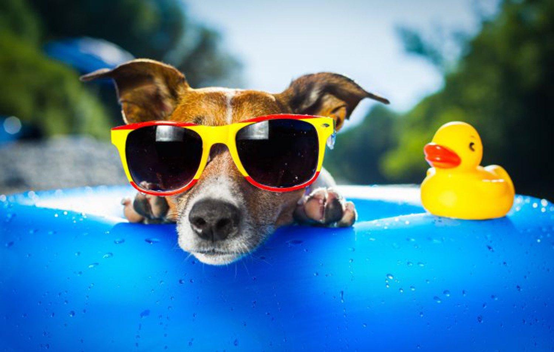 Turismo, in vacanza senza problemi con Fido. D'estate e non solo